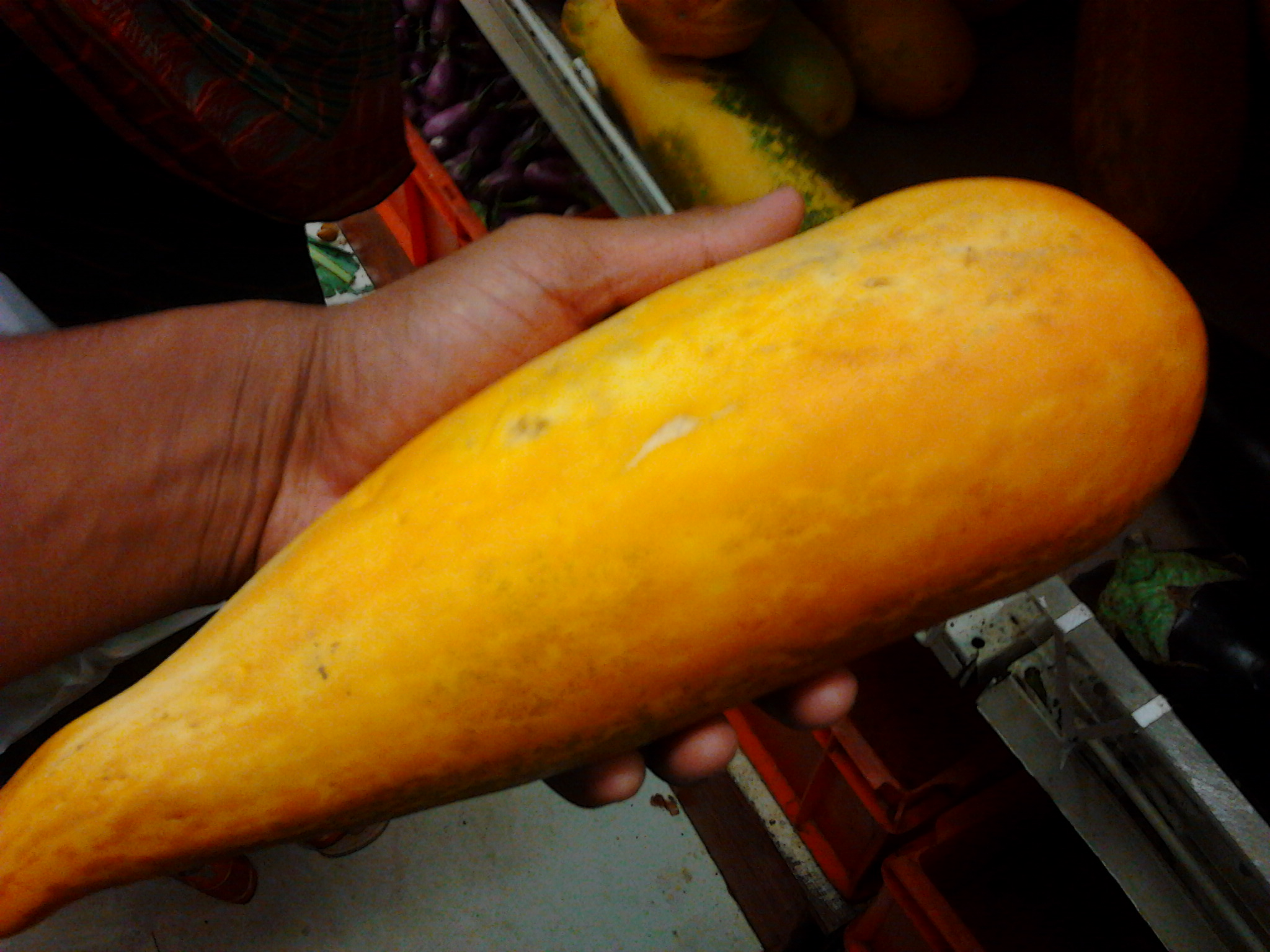 An_Indian_yellow_cucumber